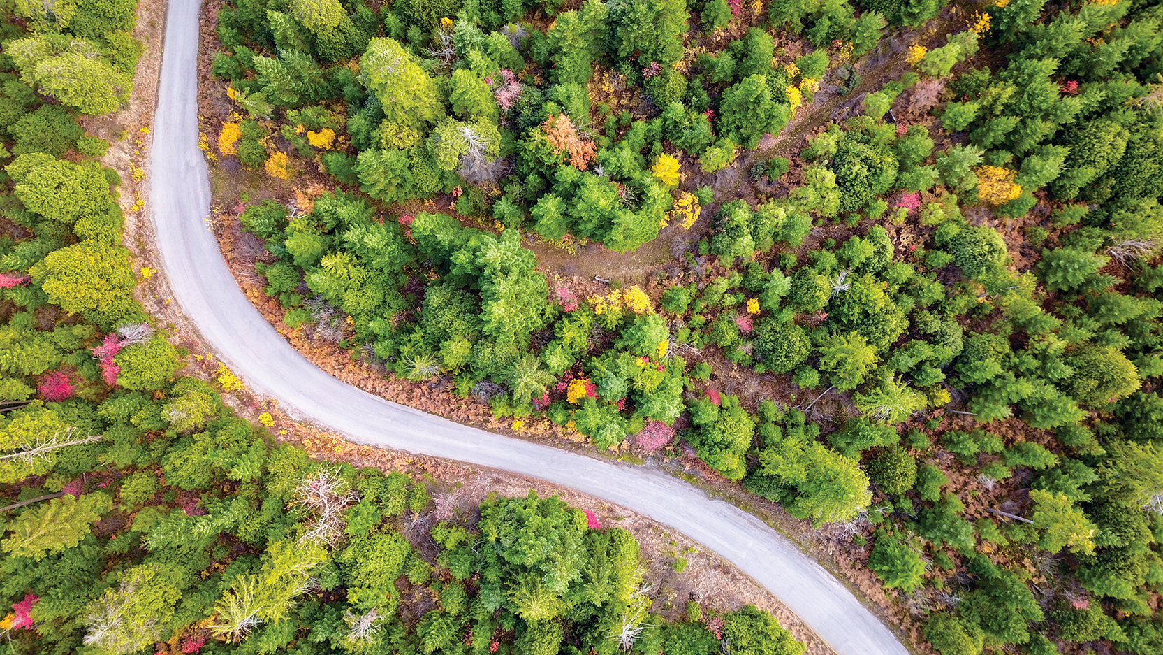 Aerial view of Pacific Northwest road